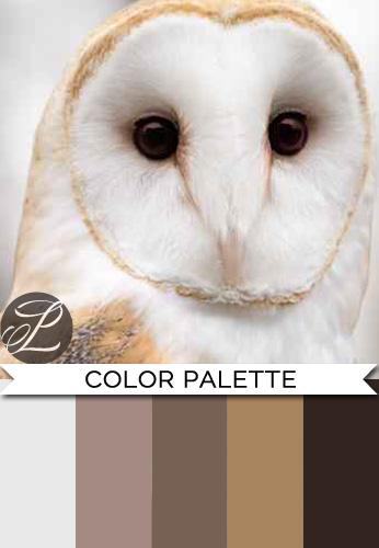 Owl Color Palette